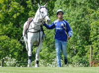 gray polo pony with saddle led by Argentinian groom wearing blue Samsung shirt
