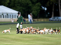 Royal Agricultural University beagle pack